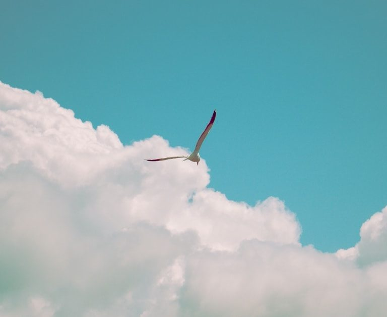 blue sky with clouds and a flying bird